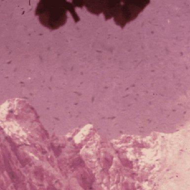Detailvergrößerung altes Dia, verschmutzt und mit starkem Rotstich
