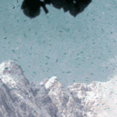 Der Rotstich wurde mit der Farbrestaurierung (ROC) entfernt, die Verunreinigungen auf dem Dia sind noch deutlich sichtbar.